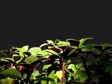 plantitas con fondo gris