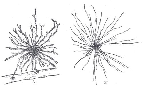 Ejemplo de micro cartografías y patrones de crecimiento con micelio